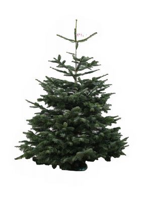 Real Simply Nordmann Christmas Tree 160   200