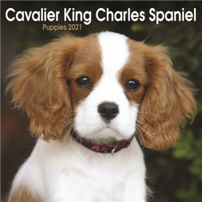 Cavalier King Charles Spaniel Puppies Mini Wall Calendar 2021