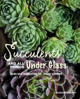 Succulents All Things Under Glass