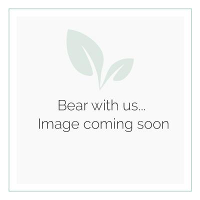 Honey & Wild - White Stake Bird Feeder