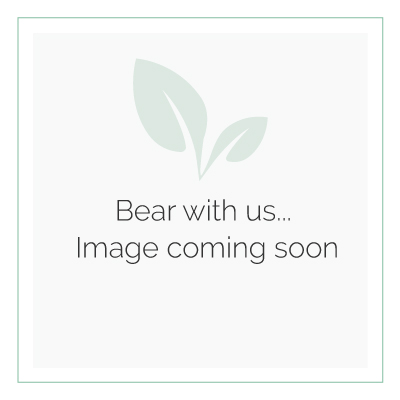 AFK Garden Classic Trough Sage 870mm