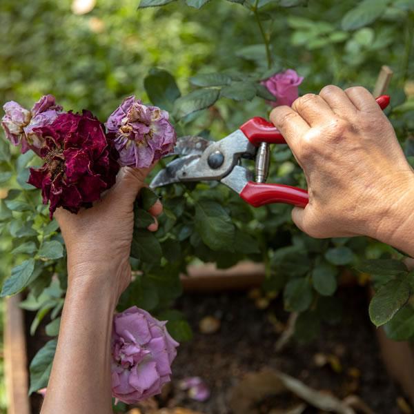 How to Deadhead Plants
