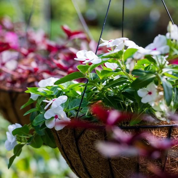 Create Your Own Hanging Basket