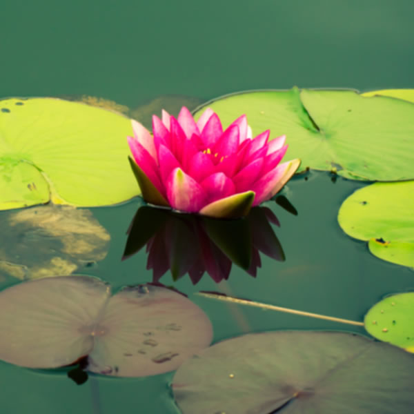 Create your own Pre-formed Pond
