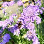 June Jobs in the Garden