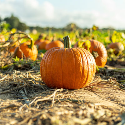 Pumpkin Tips To Try This Halloween